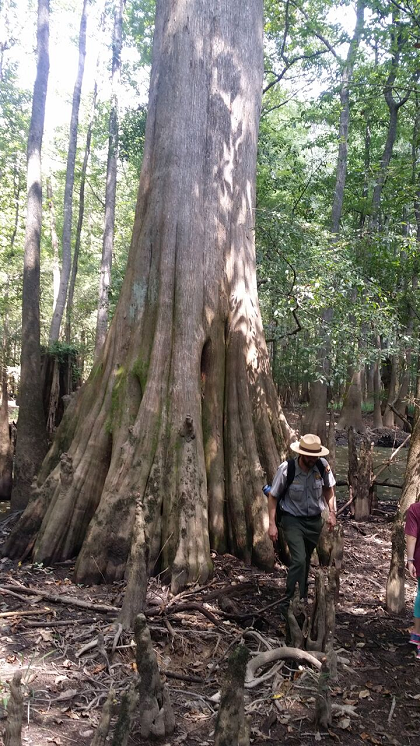General Greene's Tree